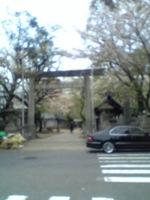 名古屋の桜.jpg