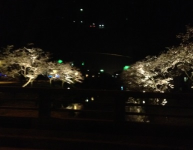 0329sakura.jpg